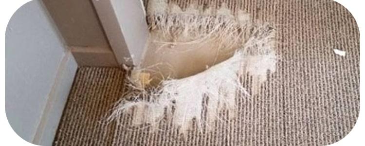 Best Carpet Repair Armadale